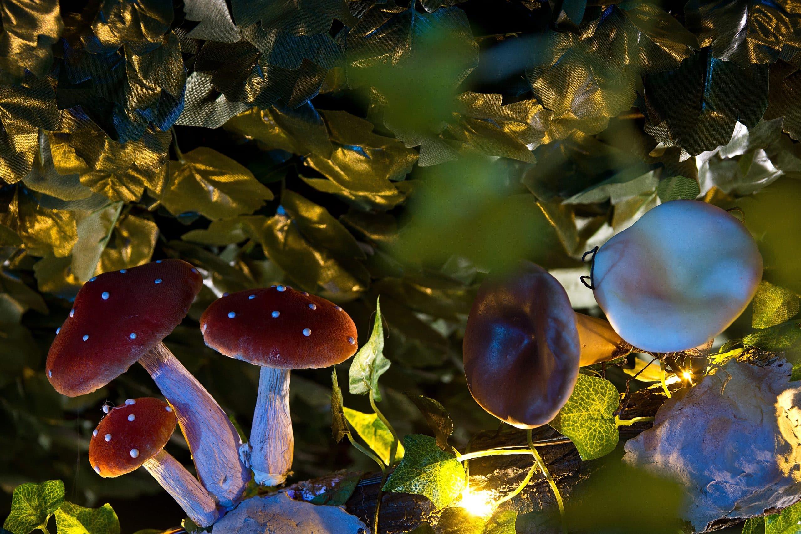 Image de champignons illustrant la salle Magie Noire de l'escape game le défi des ducs à Dijon